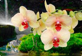 Orchidee storczyki